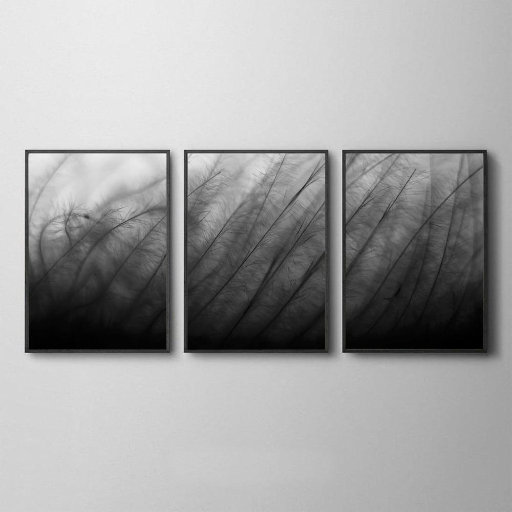 Conjunto de Quadros Microscopico Preto e Branco