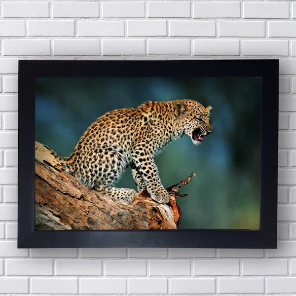Quadro Decorativo Leopardo