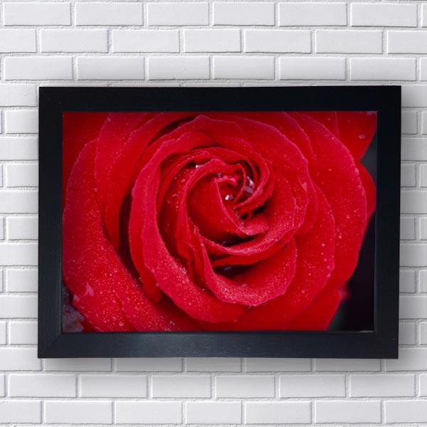 Quadro Botão de Rosa