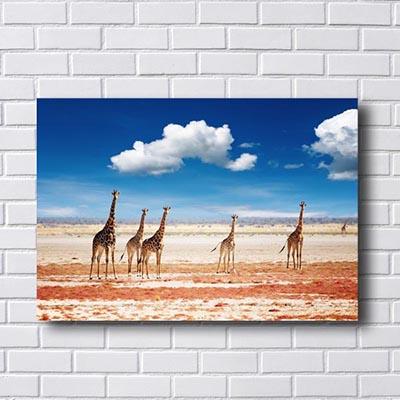 Quadro Decorativo de Girafas