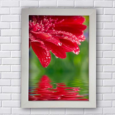 Quadro Flor Vermelha